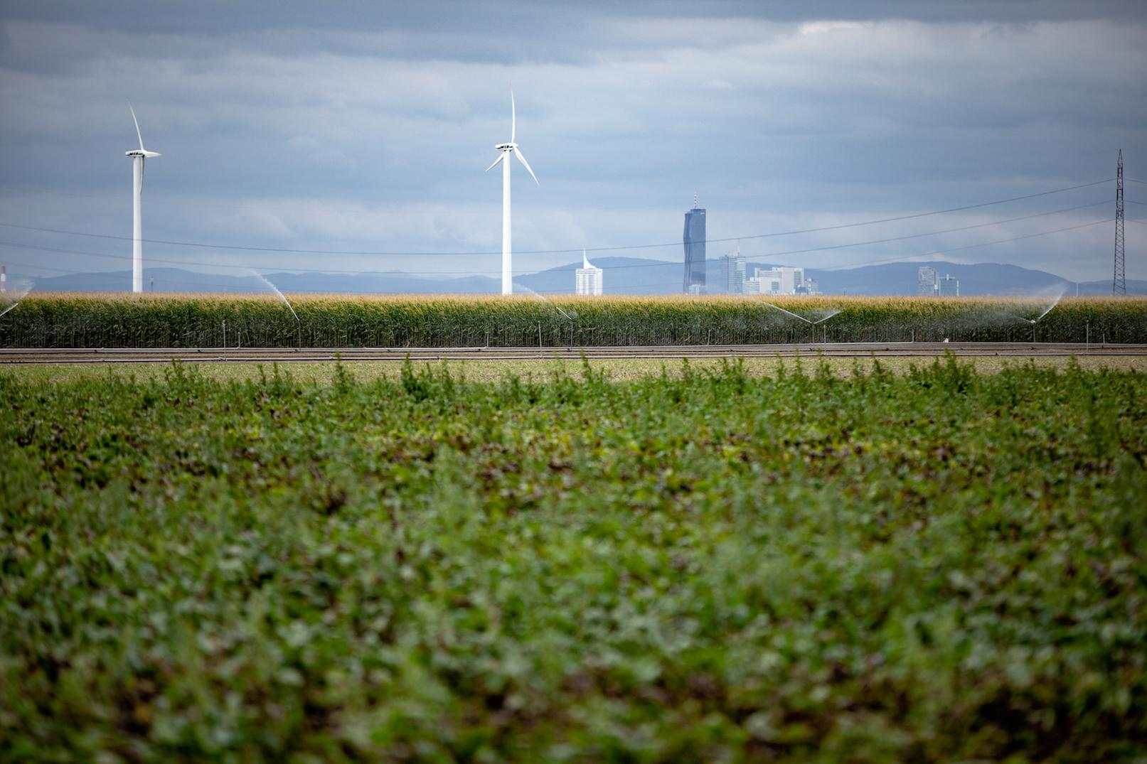 20190821 094549 Climate impact Wien cmitja kobal greenpeace 14. Juni 2021